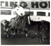 Jody Fairfax at the King Ranch Championship Cutting January 1982