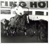 Jody Fairfax at the King Ranch Championship Cutting January 1982