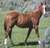 Doll House 45 as a yearling
